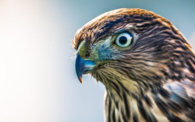 Learning Empathy From Falconry